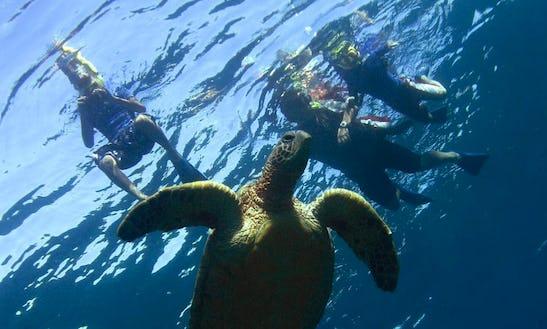 Enjoy Guided Snorkeling In Kahului, Hawaii