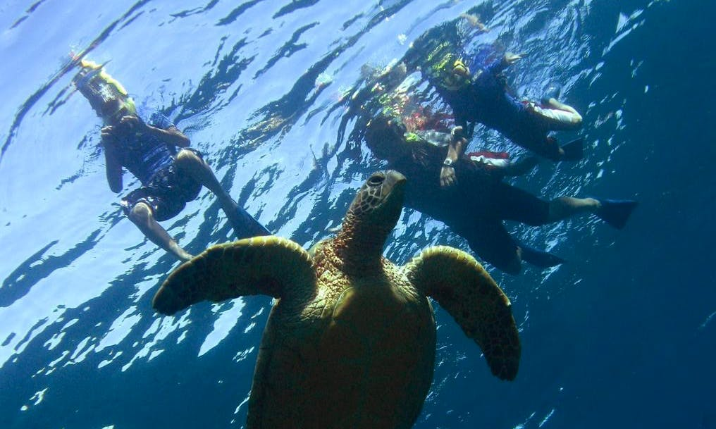Enjoy Guided Snorkeling in Kahului, Hawaii