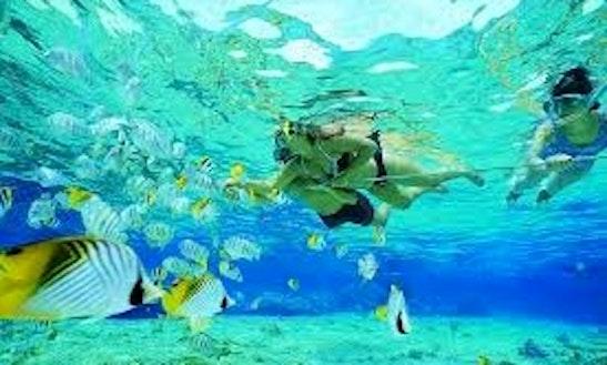 Snorkeling In Miami, Australia