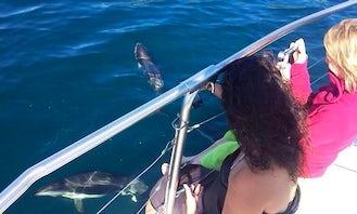 "Experience Marlborough Sound on 29ft ""Miss Te Rawa"" Twin Engine Aluminum Boat"