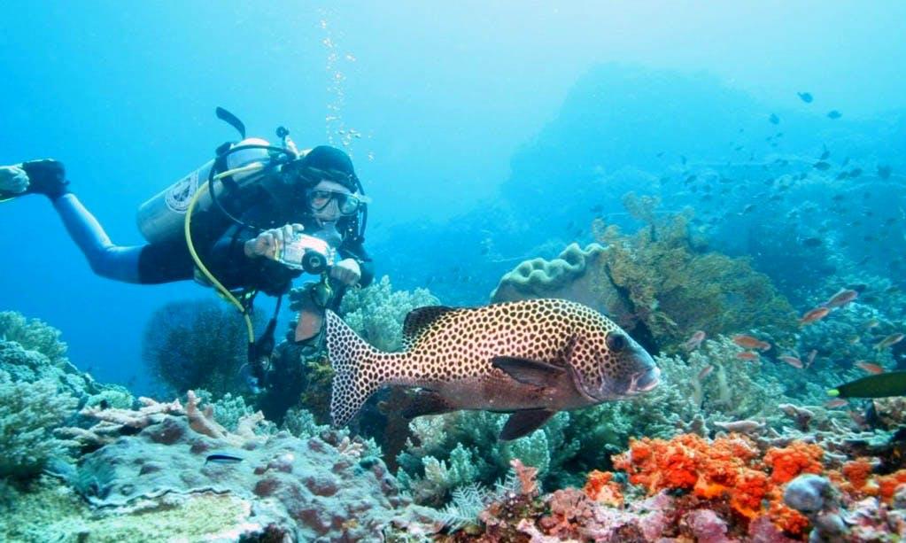 Fun Scuba Diving in Kuta Selatan, Bali
