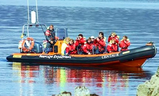 Enjoy Ullapool, Scotland On 28' Rigid Inflatable Boat