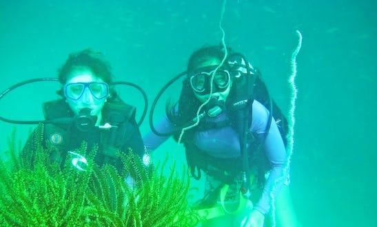 Enjoy Diving Trips In Kota Kinabalu, Sabah