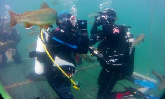 Enjoy Diving Trips And Courses In Vordernberg, Austria