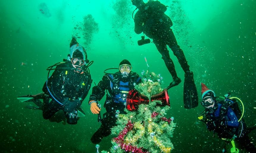 Enjoy Diving Courses on Campbell River, British Columbia