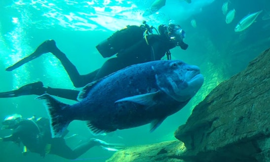 Enjoy Diving Trips Courses In Cape Town, South Africa