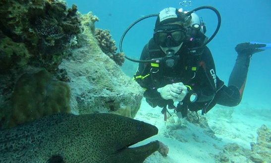Enjoy Diving Trips And Courses In Red Sea Governorate, Egypt