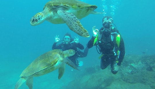 Enjoy Baptism Diving Trips At Canary Islands, Spain