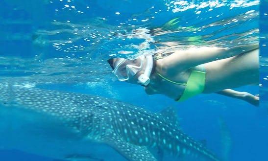Enjoy Snorkeling Tours In Cebu City, Philippines