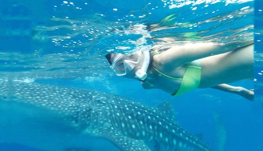 Enjoy Snorkeling Tours In Cebu City, Philippines