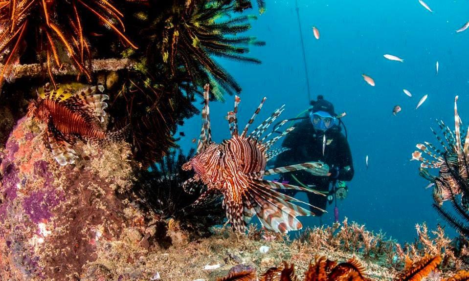 Enjoy Diving Courses in Kota Kinabalu, Sabah