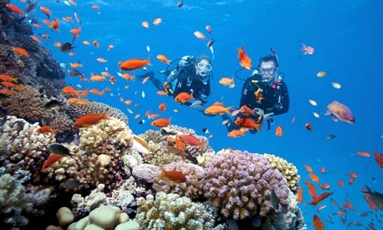 Enjoy Diving Trips & Lessons In Ban Tai, Surat Thani