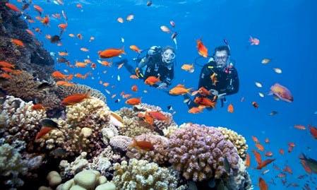 Enjoy Diving Trips & Lessons in Ban Tai, Surat Thani