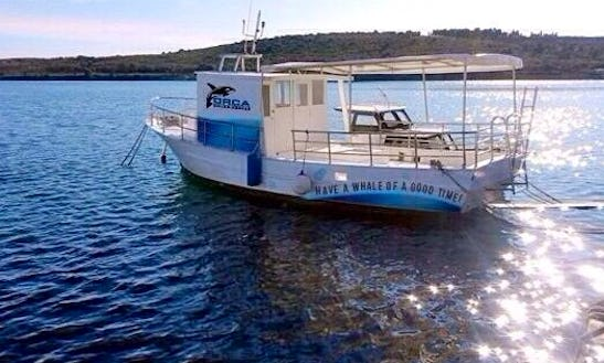 Enjoy Diving Courses And Trips In Pula, Istarska