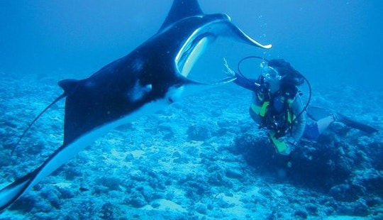 Enjoy Diving Trips In Ambatoloaka, Nosy Be, Madagascar