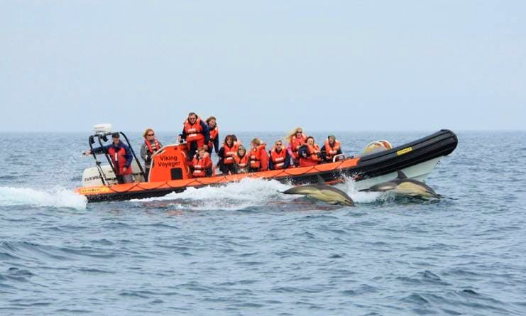 Enjoy Saint Davids, Wales on Rigid Inflatable Boat