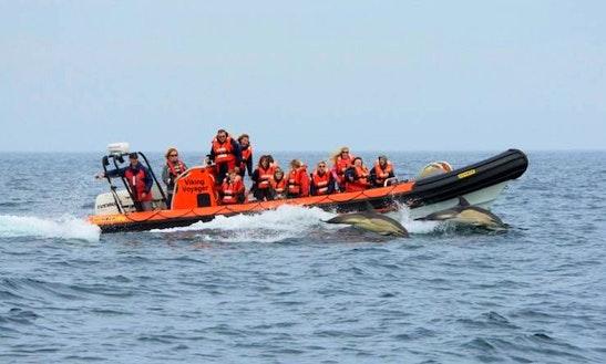 Enjoy Saint Davids, Wales On Rigid Inflatable Boat