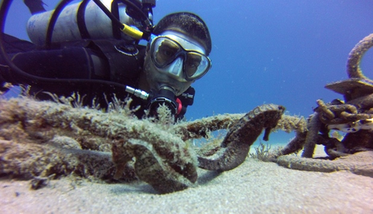 Experience Of A Personalized Diving Trips In Honolulu, Hawaii