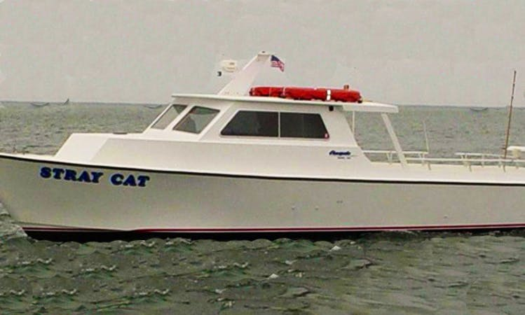 Enjoy Fishing In Longport, New Jersey With Captain Mike