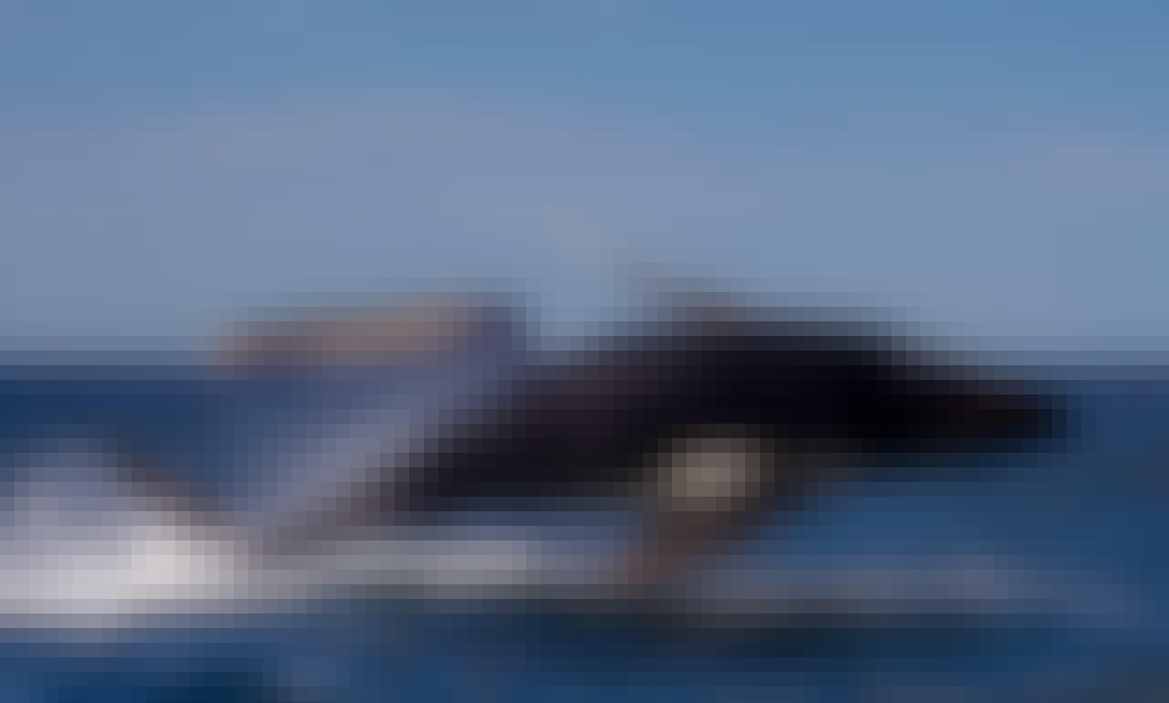 Scenic Wildlife & Seal Snorkel Tours from Eaglehawk Neck, Tasman Peninsula