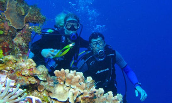 Padi Open Water Diver Course In Dubai, United Arab Emirates