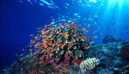 2 Dive At Blue Lagoon/jepun