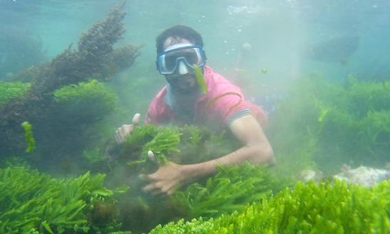 Enjoy Diving And Snorkelling Trips In Malwan, Maharashtra