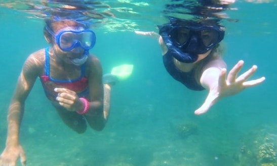 Discover Snorkeling Safari Trip In Durban, South Africa