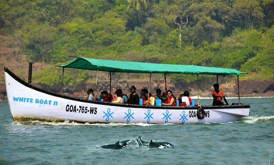 Enjoy Dolphin Tours In Candolim, Goa