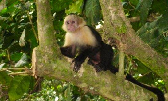 Enjoy Monkey Boat Tour In Esterillos Oeste, Costa Rica