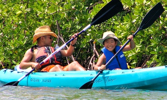 Guided Mangrove Lagoon Cas Cay Kayak Tour In St. Thomas, Us Virgin Islands