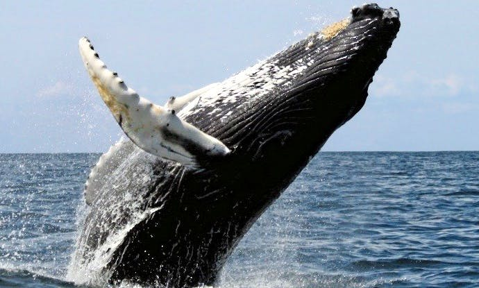 Reserve Your Spot to Awesome Whale Watching Trips in Cockburn Town, Turks Islands
