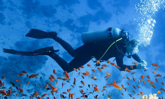 Enjoy Diving And Snorkeling Trips In Mahébourg, Mauritius