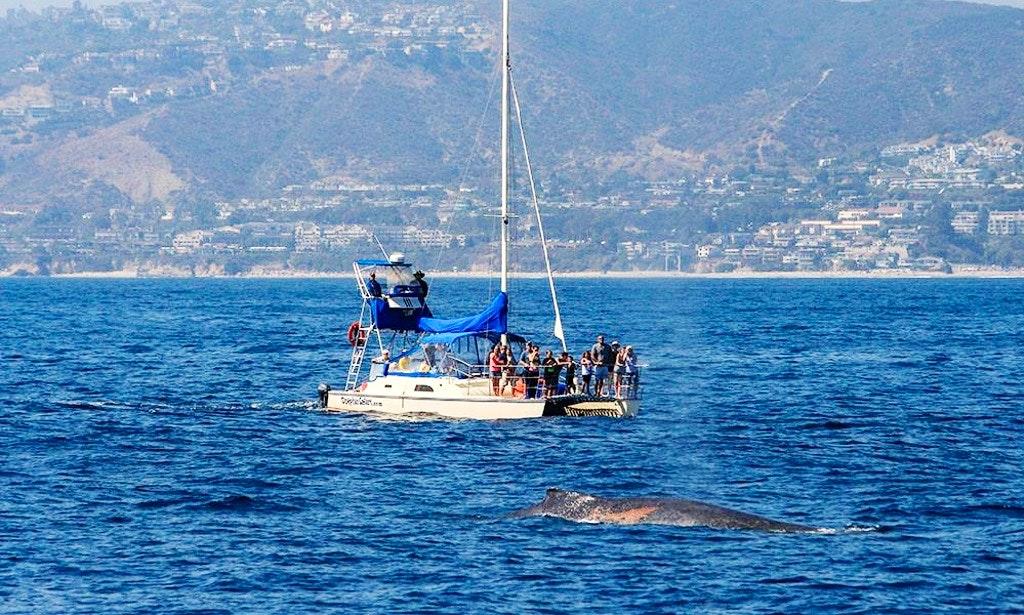Whale Watching Tour in Dana Point, California