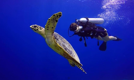 Powerful Diving Trips And Dive Courses With Certified Padi Instructor In Male, Maldives