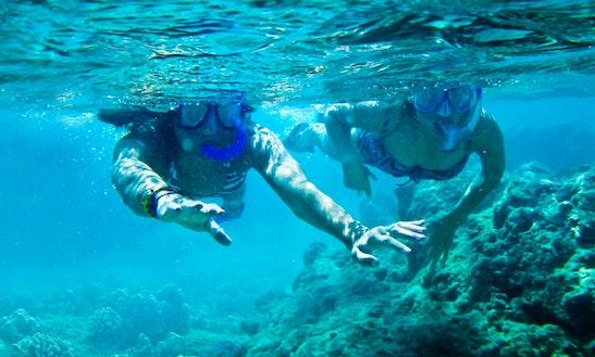 Explore Oahu's Underwater Treasures From Laie, Hawaii