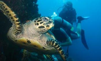 Diving Tours (min of 2 people): Amed, Menjangan Island, Nusa Penisa, Padang Bay!
