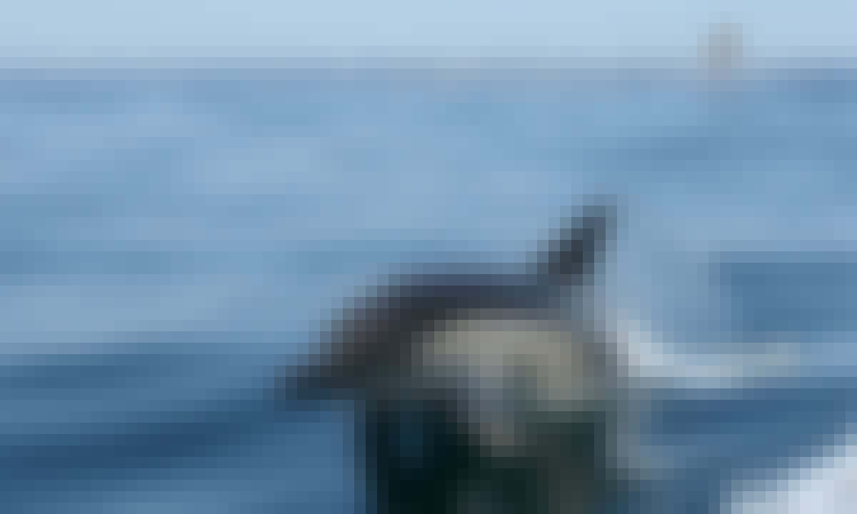 Sunseeker Yacht Charter Vilamoura