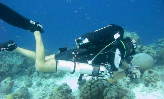 Enjoy Diving Trips & Lessons In Kralendijk, Bonaire