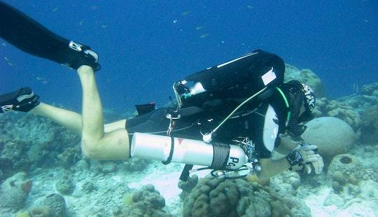 Diving Trips And Lessons In Kralendijk, Bonaire