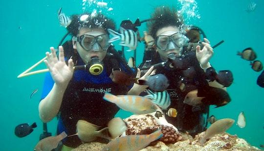Enjoy Diving In Denpasar, Bali