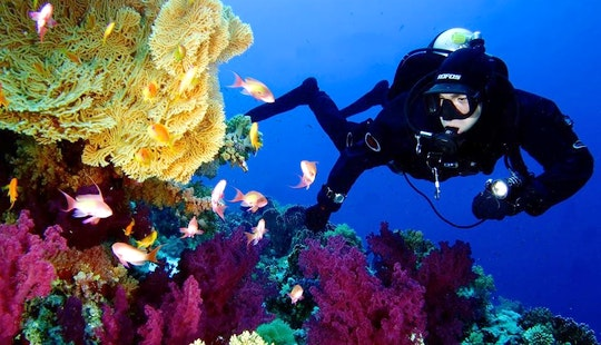 Enjoy Diving In Santa Margherita Ligure, Italy