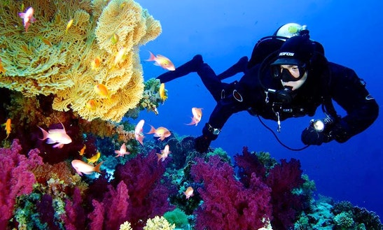 Enjoy Diving In Santa Margherita Ligure, Italy