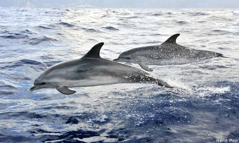 Enjoy Dolphin & Whale Watching Tour in Funchal, Potugal