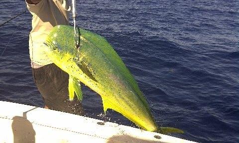 ''TaylorMade'' Deep Sea Fishing Charters in Sint Maarten
