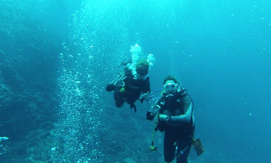 Enjoy Diving Trips & Lessons In Pretoria, South Africa