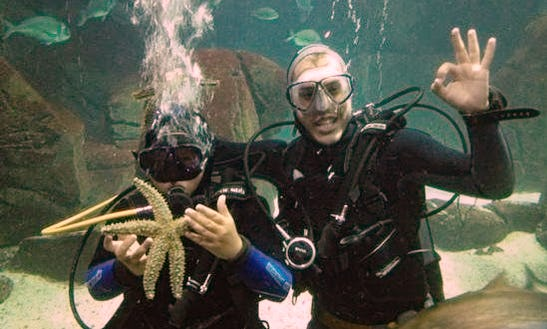 Enjoy Diving In Ponta Do Sol, Madeira