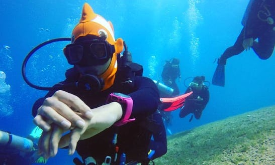 Scuba Diving Trips And Courses In South Sinai Governorate, Egypt