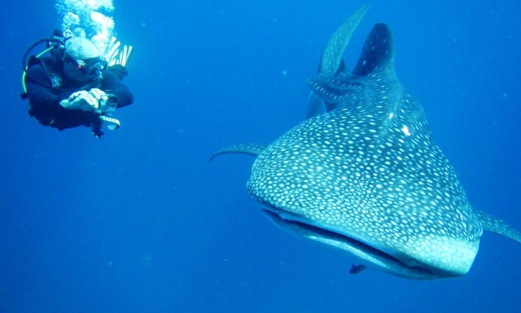 Scuba Diving in Tambon Ko Chang, Thailand
