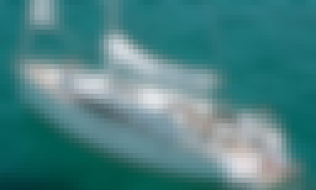 Charter 46' Bavaria Cruising Monohull  in Bruck an der Mur, Steiermark